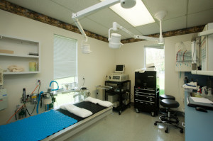 Adamstown Veterinary Hospital Examination Room 2